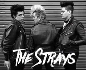 strays-2